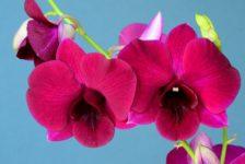 Las plantas: la mejor forma de decorar espacios externos e internos