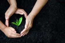Ecofiltro celebra el día de la tierra con más de medio millón de árboles salvados