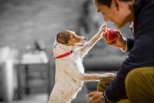 Consiente y cuida a tus mascotas en tiempos de confinamiento