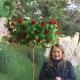Magia floral