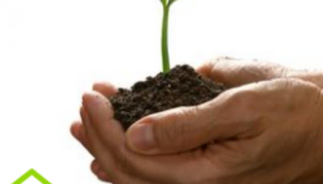 ¿Cómo sembrar un árbolito?