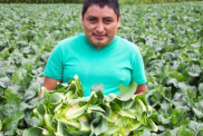 Productores agrícolas