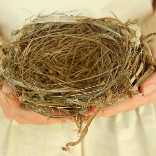 El nido vacío